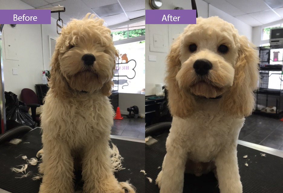 Before and after grooming golden fur