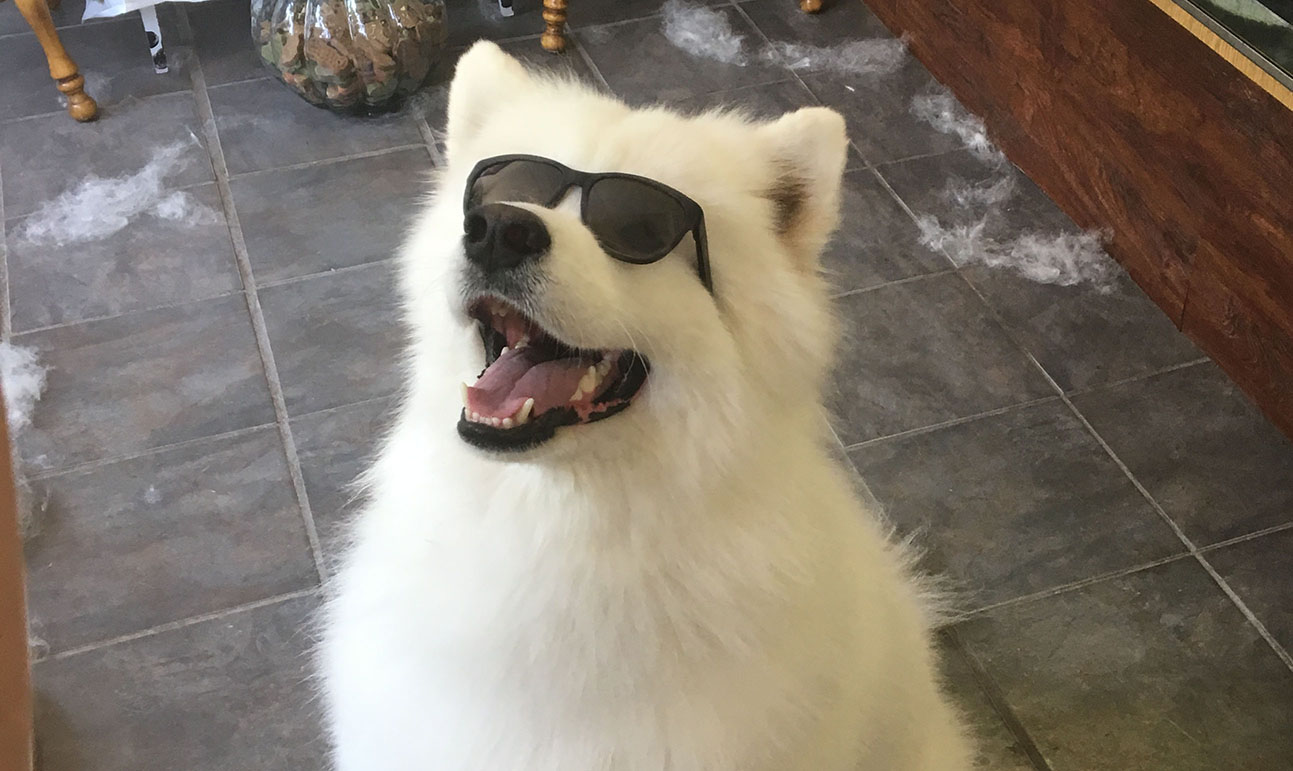 A cute and happy dog wearing sunglasses while waiting to be groomed